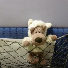 Louton dans l'avion