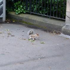 Un ch'ti écureuil à Edinburgh