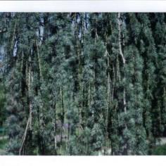 Test, le vert pin est vert pin.