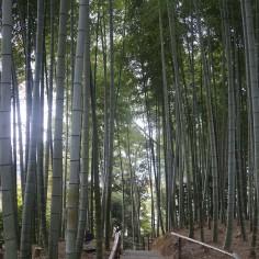 Un chemin bordé de bambous.. Qui fait en fait partie d'un autre temple, nous voilà donc devenus resquilleurs !