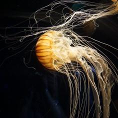 Une méduse..