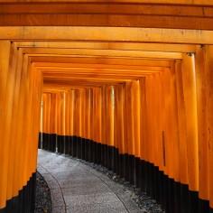 Encore des toriis..