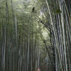 Et donc, des bambous.