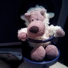 Le siège du Louton dans l'avion !
