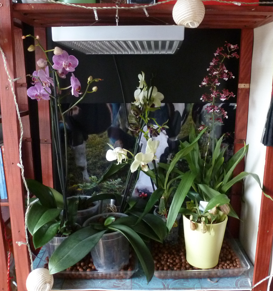 orchidee eclairage