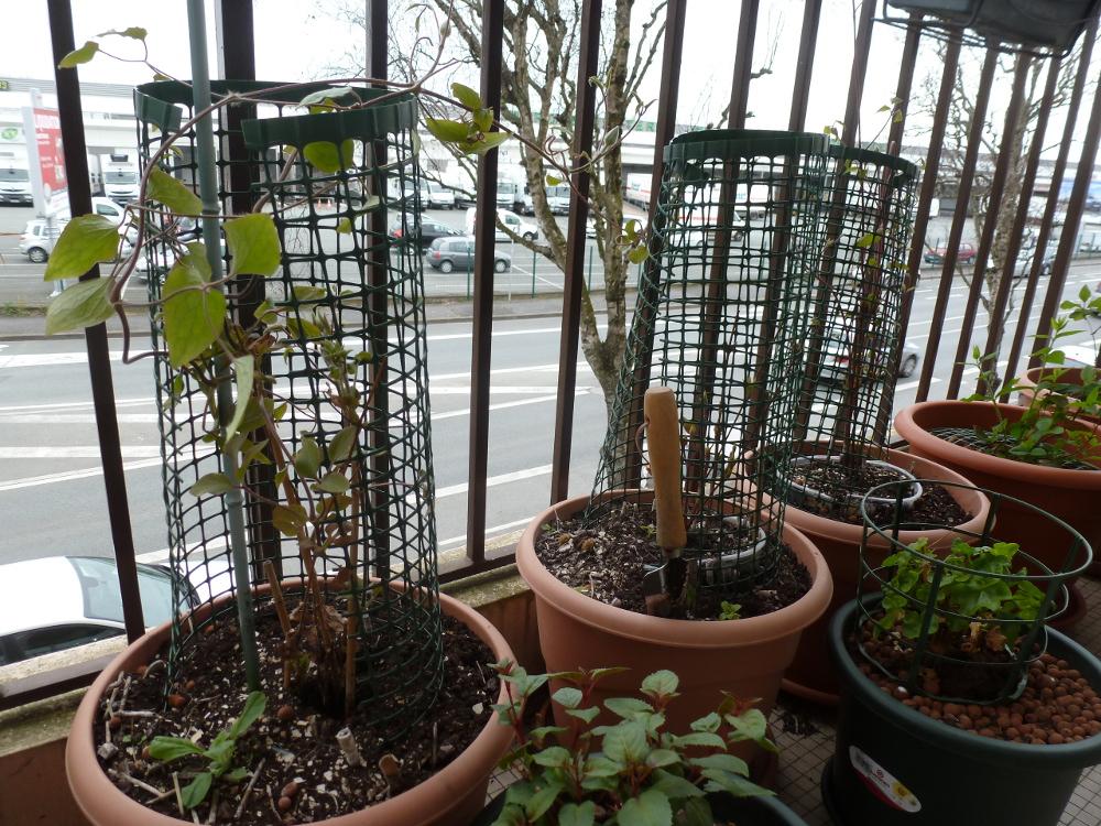 Toi aussi plante un arbre sur ton balcon - Que planter sur son balcon ...