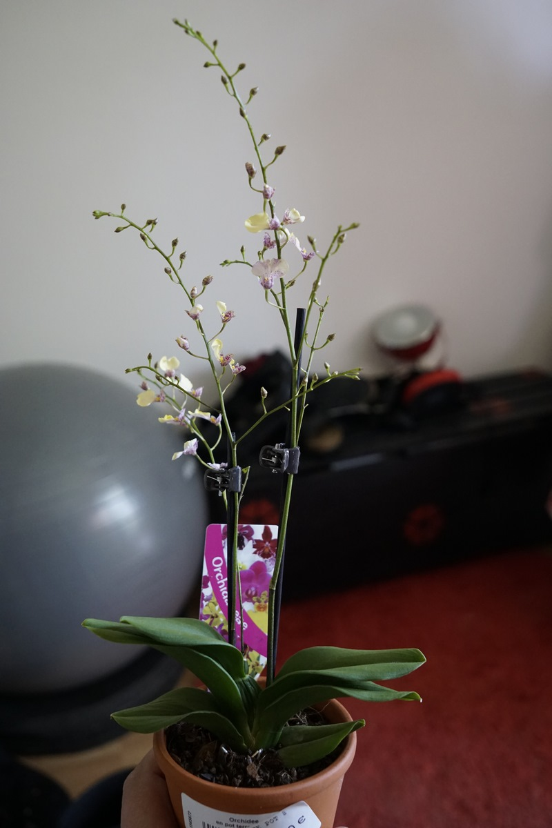Comment S Occuper D Un Orchidée s.19 sur les balcons